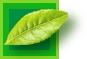 """茶カテキンの継続摂取で、""""褐色脂肪組織""""を活性化して脂肪を消費。"""